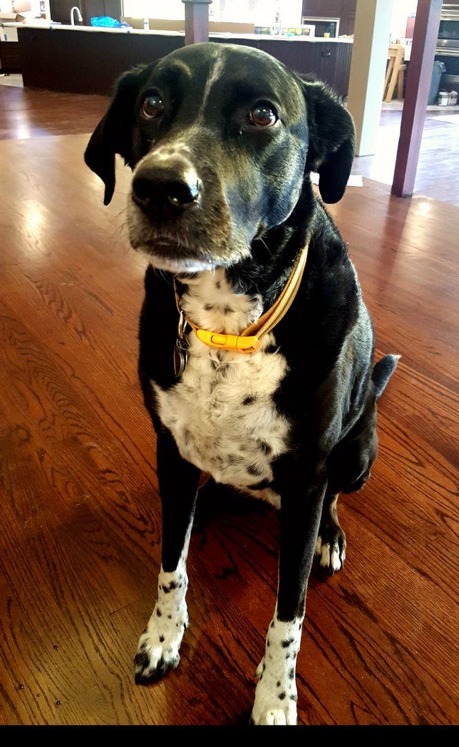 The friendly Tuxedo Park family pet dog, Mindy.